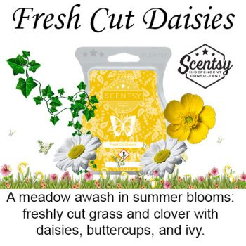 Fresh Cut Daisies Scentsy Wax Melt