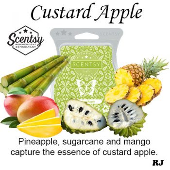 custard apple scentsy wax melt