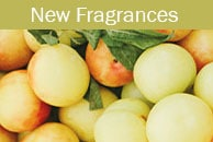 New Scentsy Fragrances