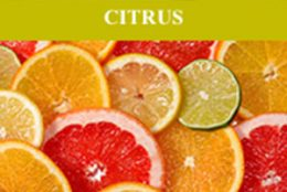 Scentsy Citrus Fragrances