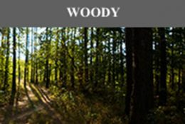 Woody Scentsy Fragrances