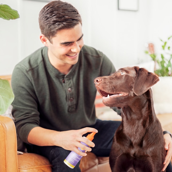 Scentsy Dog Grooming