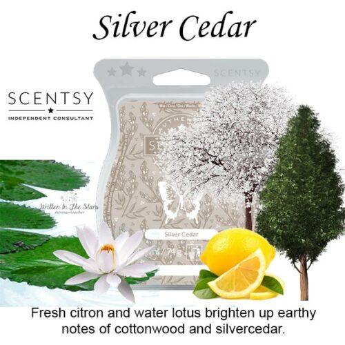 Silver Cedar Scentsy Bar