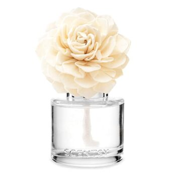 Dahlia Darling Fragrance Flower